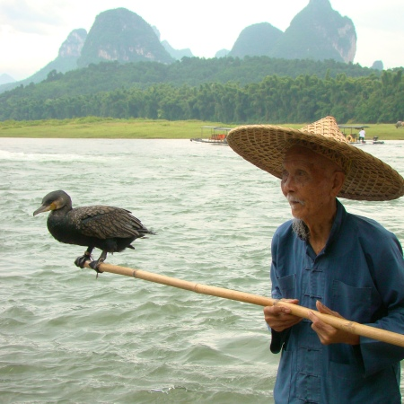 Cormorant fishing birds in mountain shrouded Yangshuo