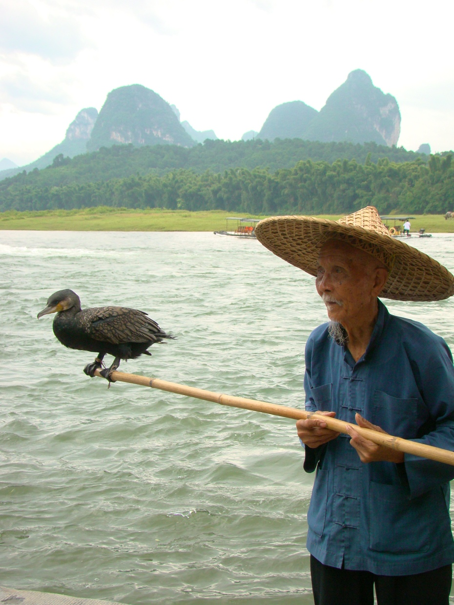 Chinese fisherman with his trusty cormorant birds.