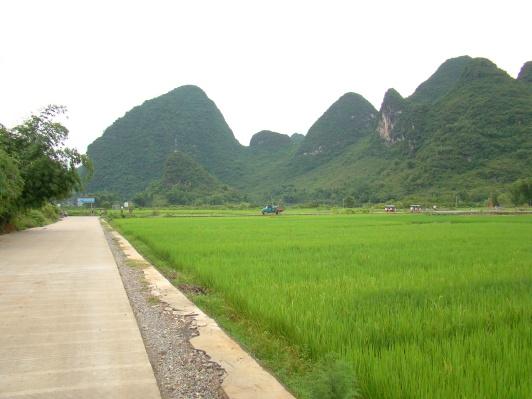 Yangshuo rice paddies