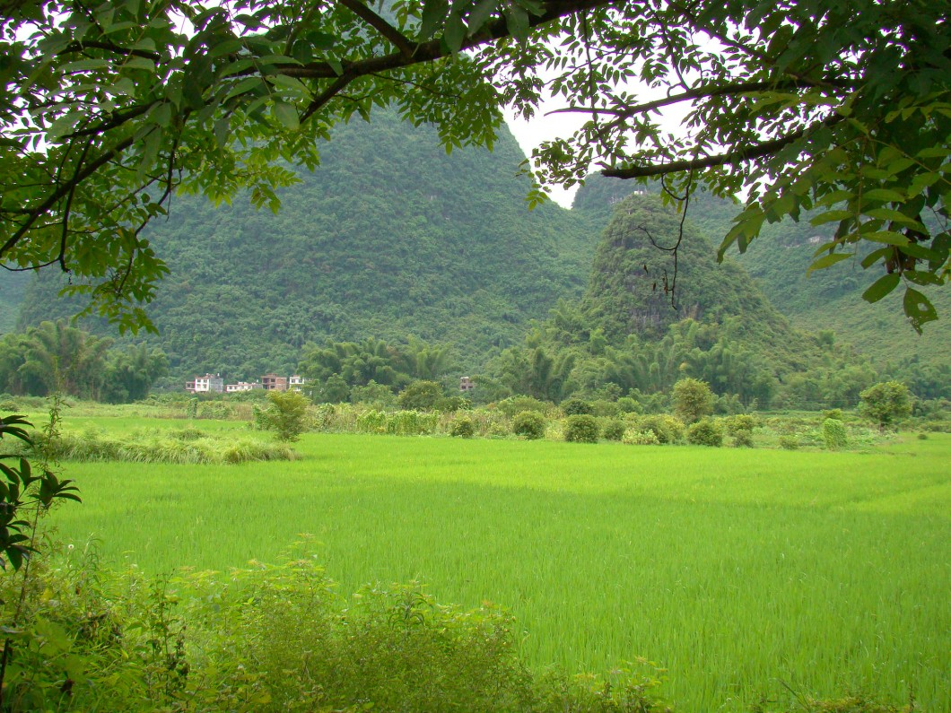 Cycling through fields of rice paddies, absolutely breathtaking!