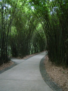 Walking through Bamboo forests to get to the main Panda pens