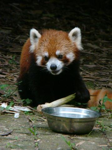 Feeding time!