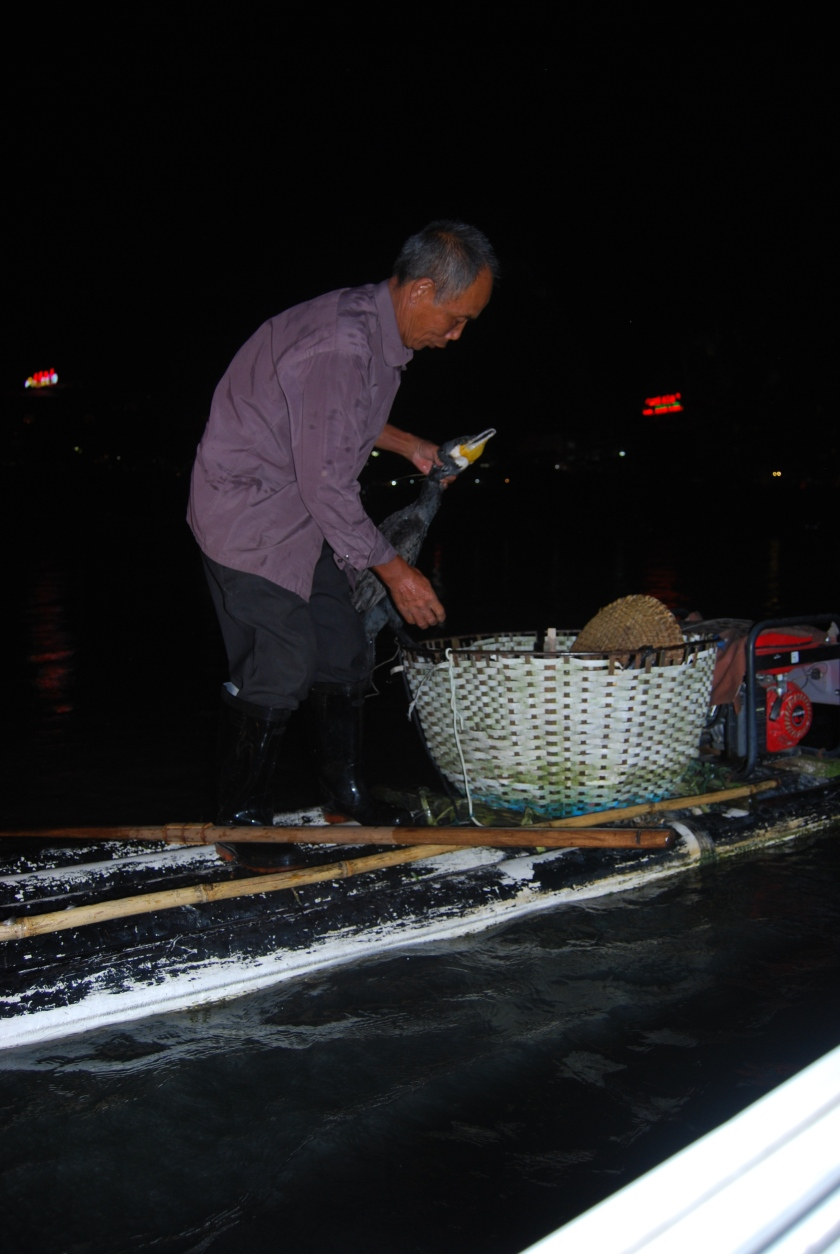 Fisherman retrieving the fish from a Cormorant