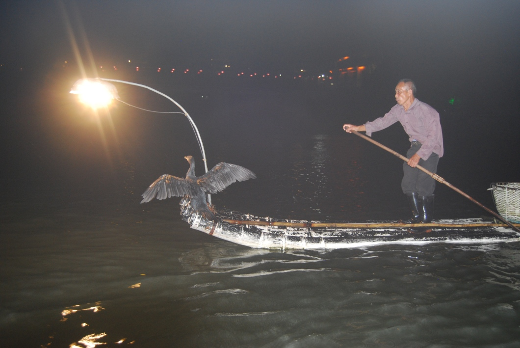 Chinese fisherman on his bamboo boat fishing with his Cormorants