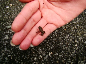 Teeny-Tiny Frogs!!