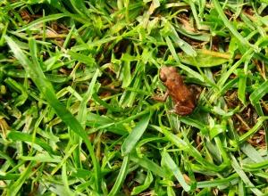 Teeny-tiny Frogs!