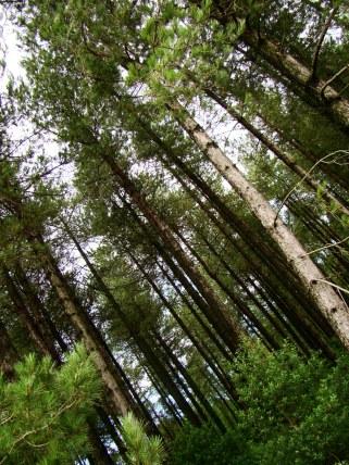 Newborough Warren Forest