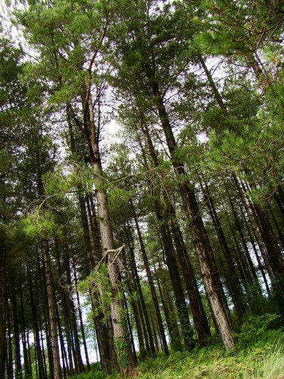 Newborough Warren Forest