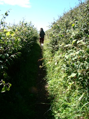 through bramble pathways