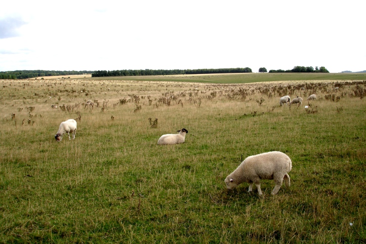 The fields surrounding Stonehenge