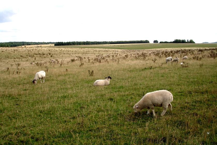 The fields surrounding Stonehenge