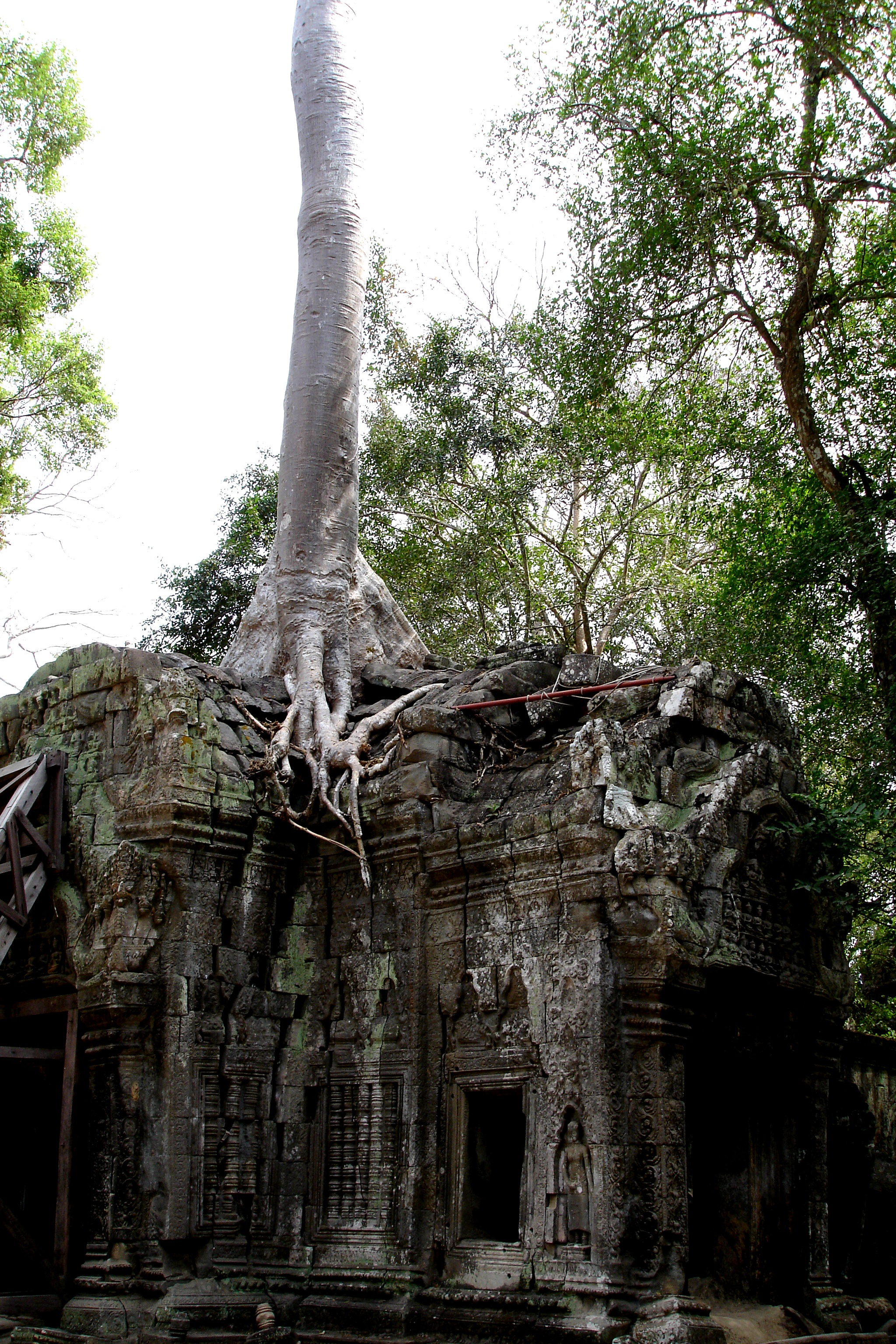 The Jungle Reclaims Beng Melea Temple