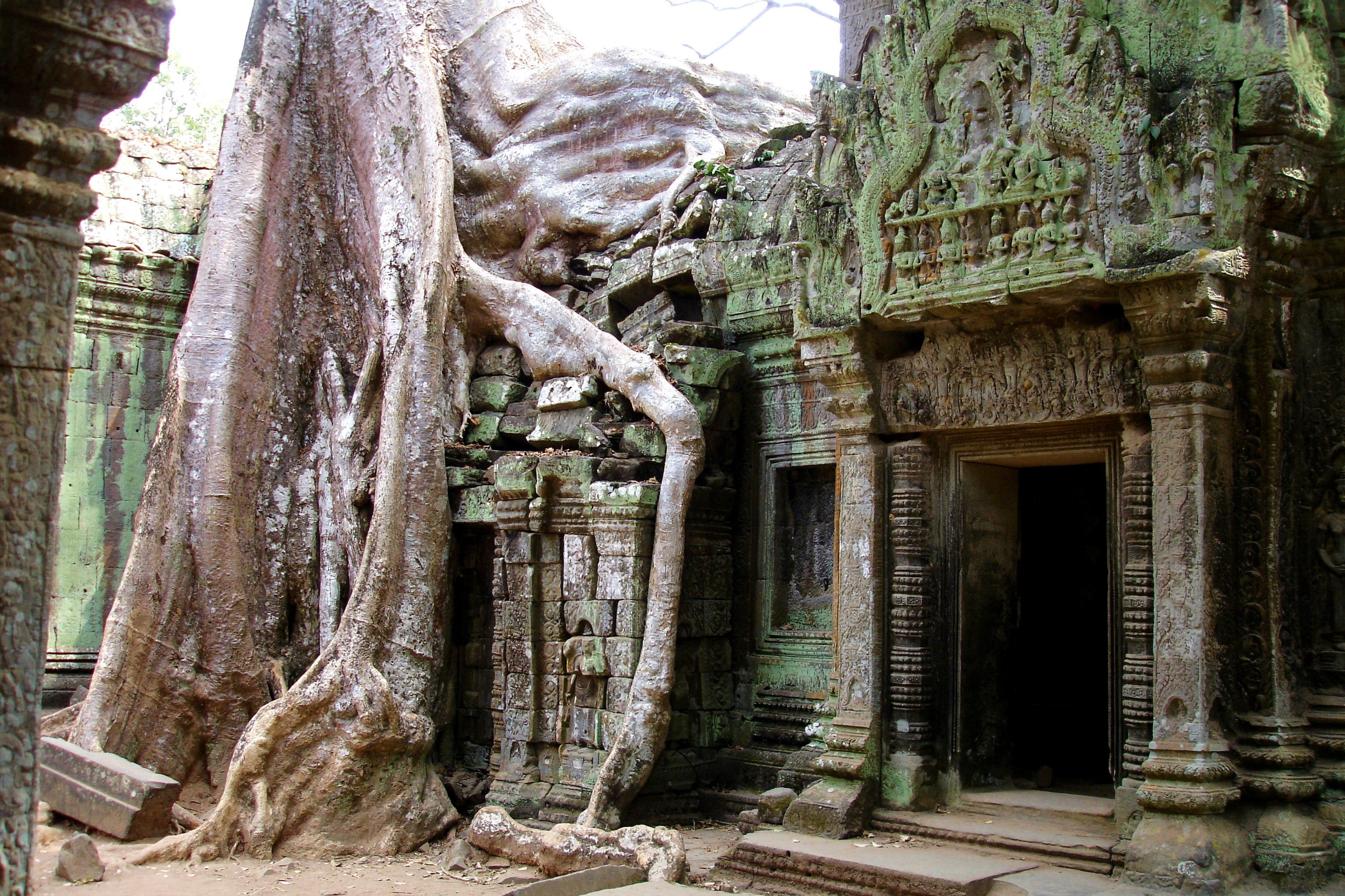 Tree Root shroud Ta Prohm Temple