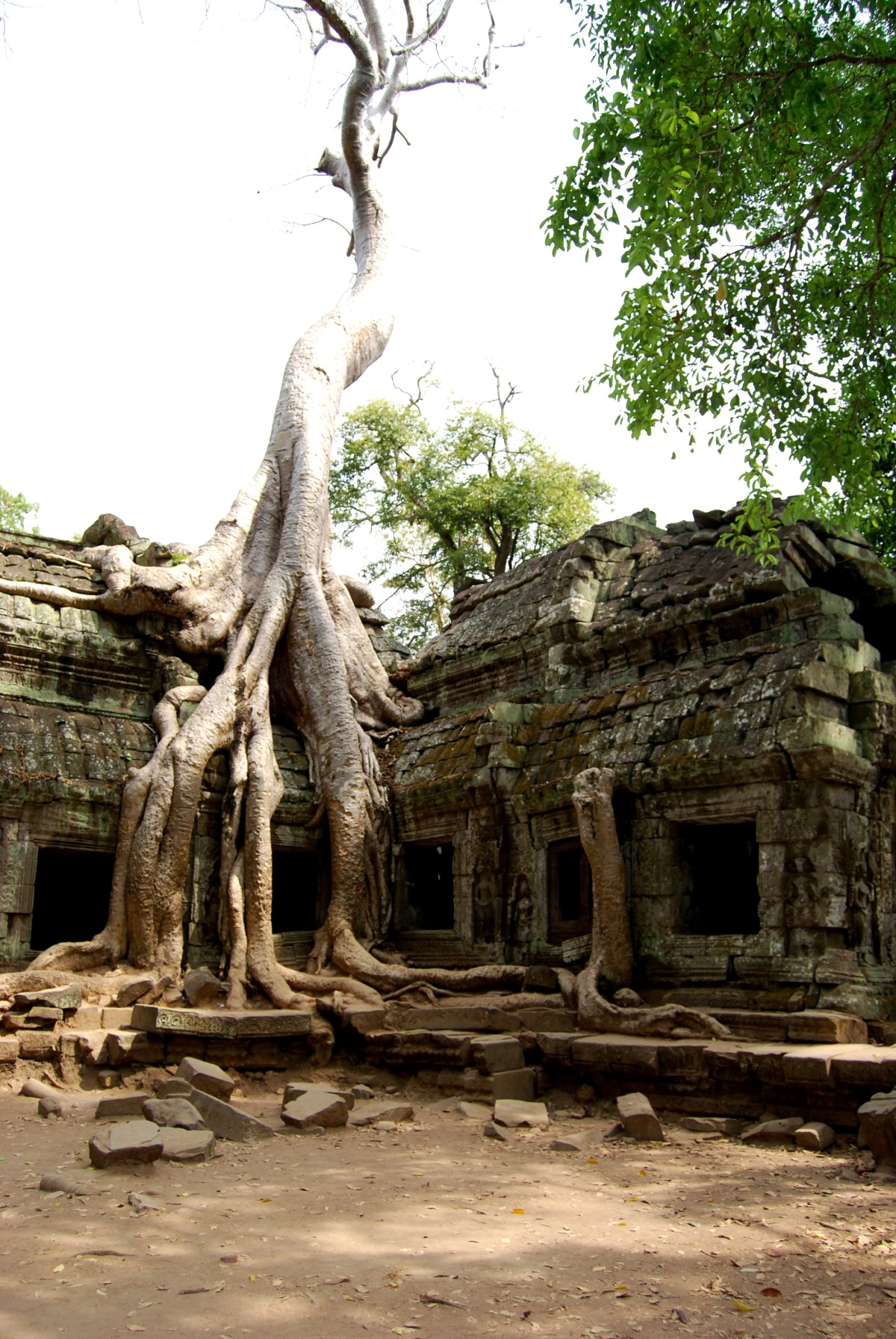 "Overgrown Ta Prohm,  the ""Tomb Raider"" Temple"