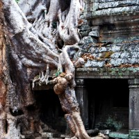 Tree Roots shroud Ta Prohm Temple