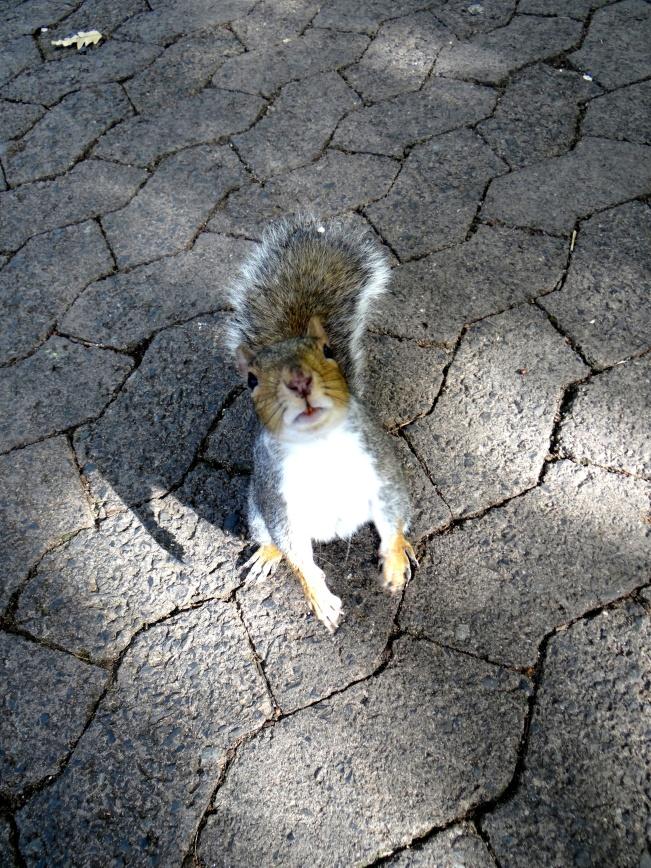 Squirrel Antics in Cape Town