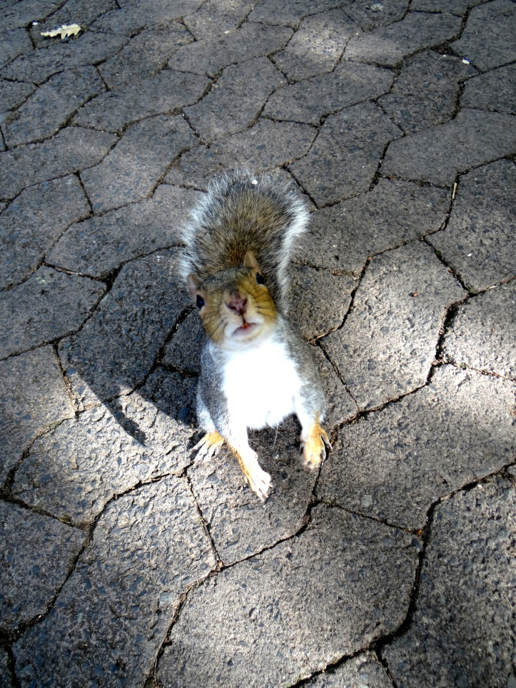 Squirrel Antics in Cape Town