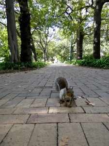 Squirrels in Cape Town