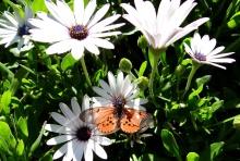 Spring in the Company's Garden