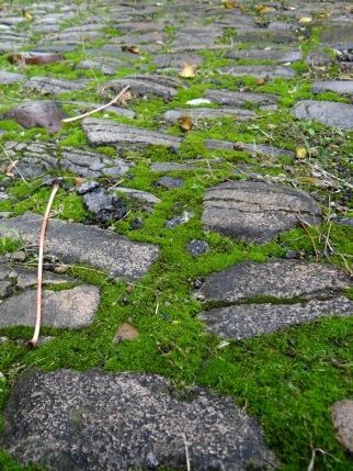 Moss adds a sense of calm, age, and stillness to a garden