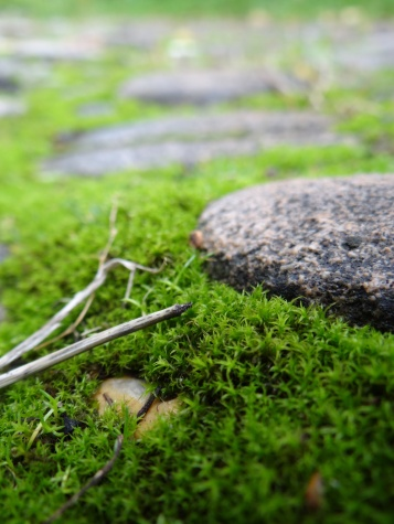 Moss adds a sense of calm, age, and stillness to a garden