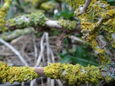 moss found on branches in the garden
