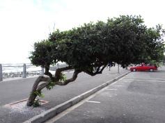 slanting trees