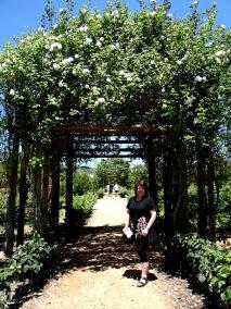 Pergolas of climbing roses