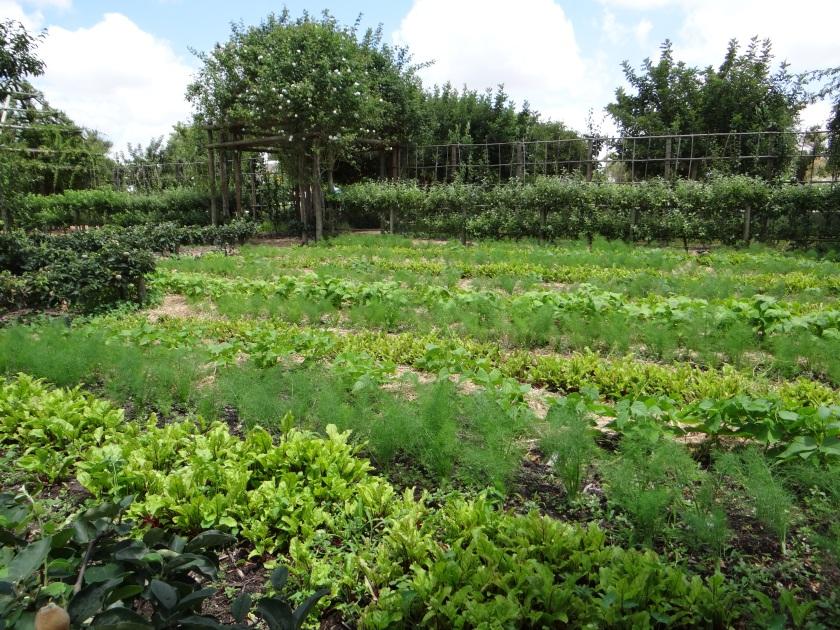 Exploring the vegetable area of Babylonstoren