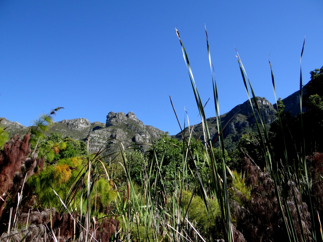 The rainfall on this side is much higher than on the other faces, hence the dense vegetation