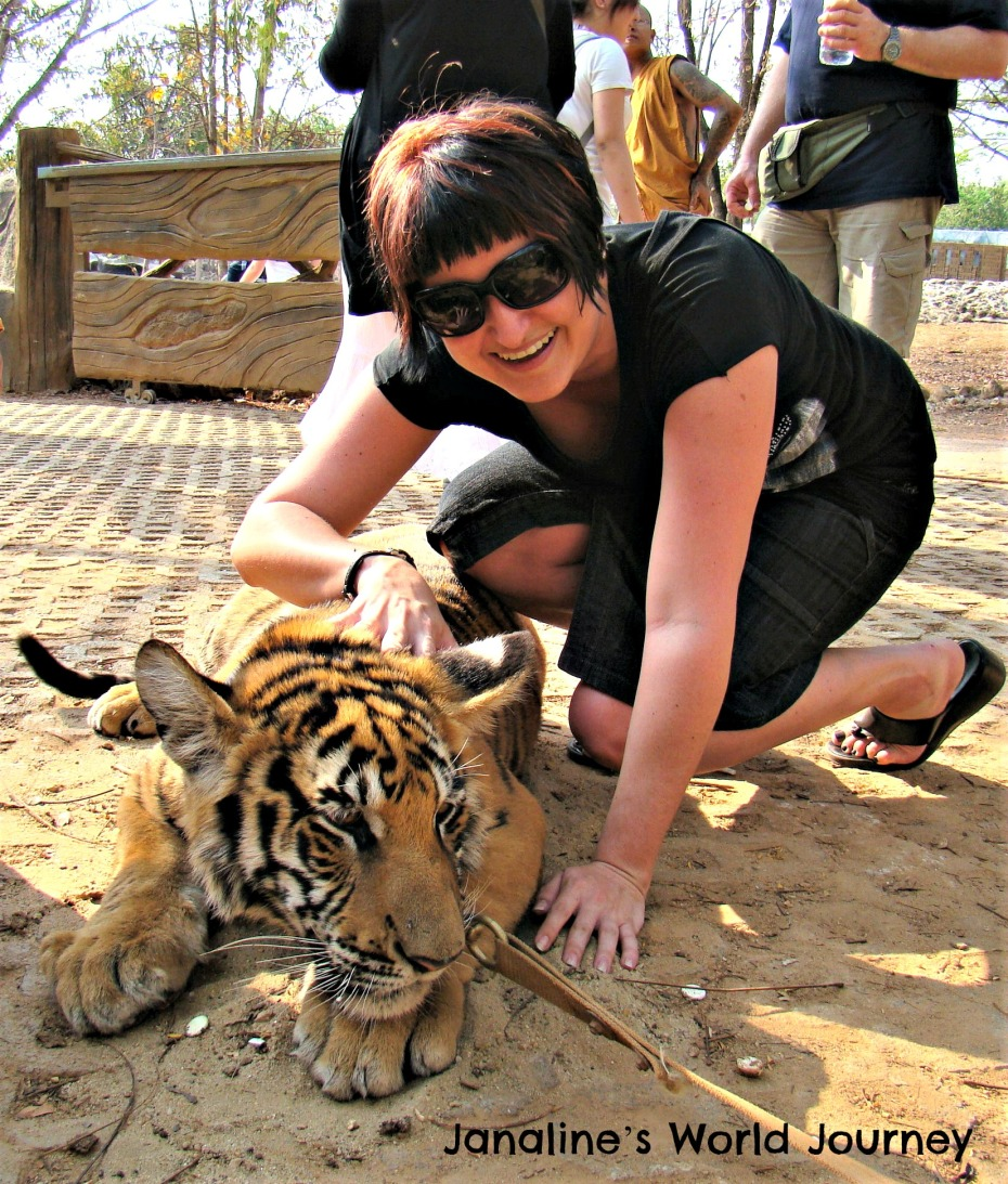 Think before visiting Tiger Temple in Thailand!