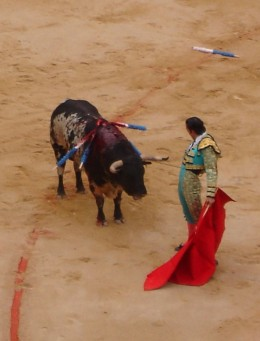 The Blood sport Bullfighting