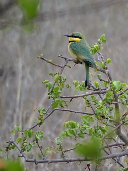 Timbavati Private Game Reserve