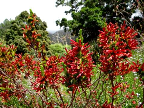 Kirstenbosch, the most beautiful garden in Africa