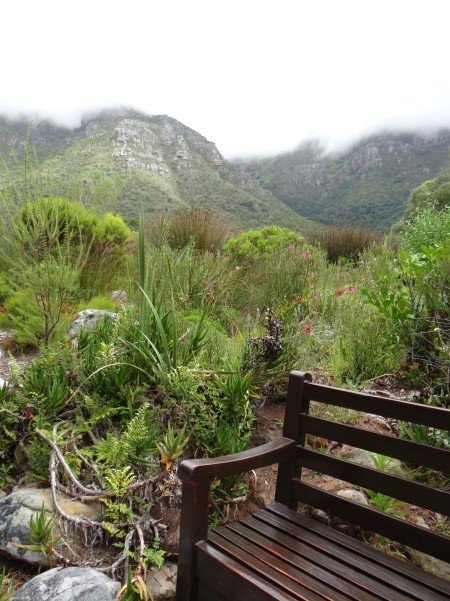 Kirstenbosch, the most beautiful garden in Africa