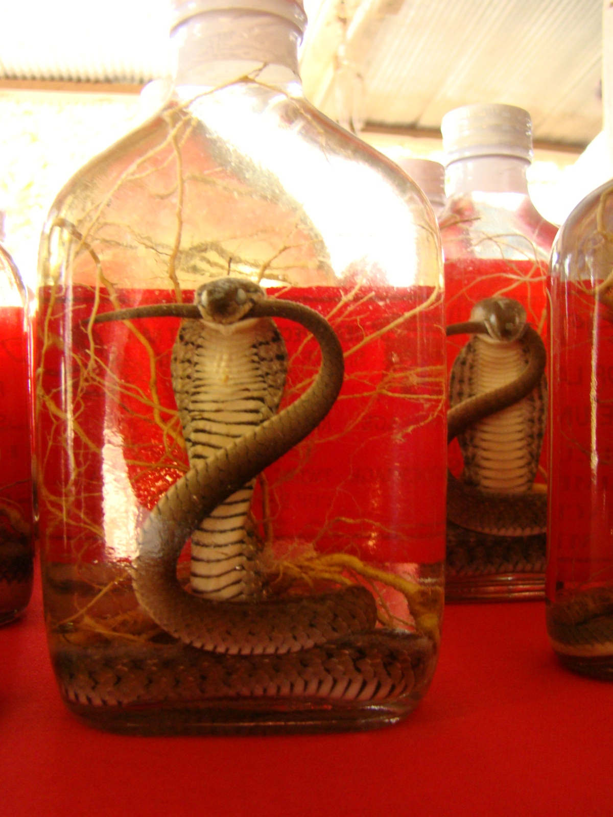 Would you drink snake wine?