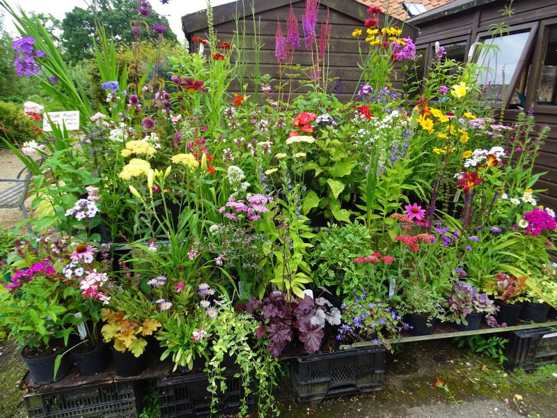 Image result for October Can Be The Month For Glorious Gardening
