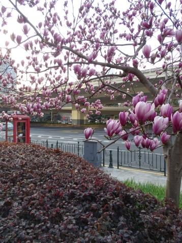 It is Springtime in Shanghai!!