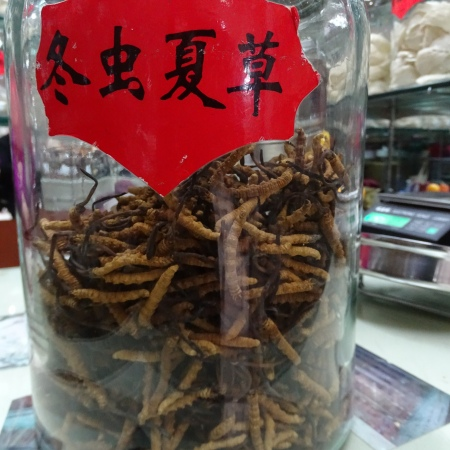 Chinese Worm Tea
